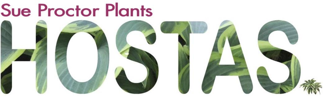 Sue Proctor Plants Growing Hostas